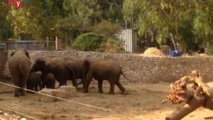 Elephants-Siren